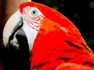 Papagei im Donjon des Aigles © bandit pics