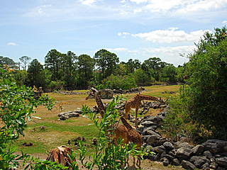 Giraffengehege im Brevard Zoo. © kylewest