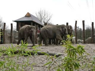 Elefanten-Park © Jörg Adler / Allwetterzoo Münster