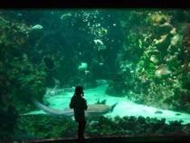 Aquarium im Oceanopolis © alainlm