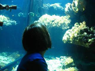 Steinhart Aquarium © Orin Zebest