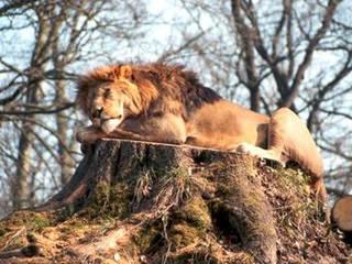 Zoo Schwerin  © Zoo Schwerin