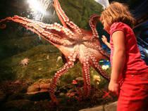 Das Seattle Aquarium in Seattle, Washington © laszlo-photo