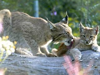 Tierpark Suhl © Tierpark Suhl
