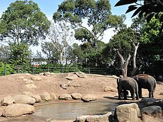 Elefantengehege im Zoo von Melbourne. © thomasrdotorg