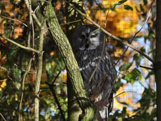 Natur- und Wildpark Buchenberg